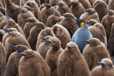 How to stand out from the crowd in 2020